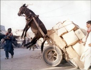donkey-cart